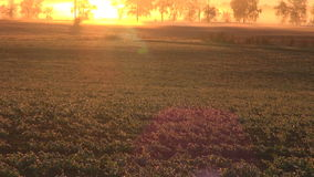 Beautiful autumn sunrise sunlight on farm fields and frost on rapeseed plants stock footage