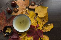 Autumn tea time still life top view closup. Beautiful autumn tea time ceremony still life top view closup background Stock Images