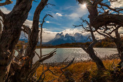 Beautiful autumn in Torres del Paine, Chile Royalty Free Stock Image