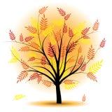 Beautiful autumn tree. Stock Photos