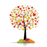 Beautiful autumn tree Royalty Free Stock Image