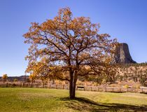 Beautiful autumn tree with Devils Tower in the background stock photo