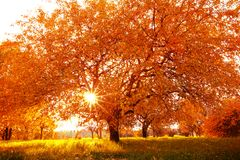 Beautiful autumn tree with fallen dry leaves Royalty Free Stock Image