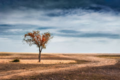 Beautiful autumn tree in a field. Dramatic fantastic landscape Stock Photos