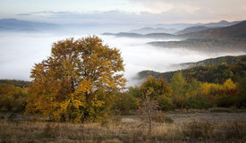 Beautiful autumn tree in front of hills half covered by clouds Stock Photography