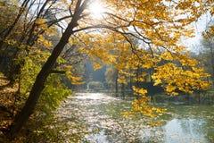 Beautiful autumn tree Stock Images