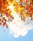 Beautiful autumn tree leaves background border Stock Images