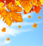 Beautiful autumn tree leaves background border Stock Photography