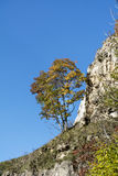 Beautiful autumn tree on a rocks Stock Image