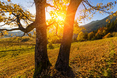 Beautiful autumn tree in the sun against the backdrop of mountai Royalty Free Stock Photo