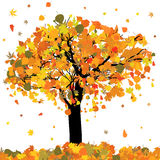 Beautiful autumn tree for your design. EPS 8 Royalty Free Stock Images