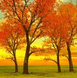 Beautiful autumn trees Stock Image