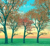 Beautiful autumn trees Royalty Free Stock Image