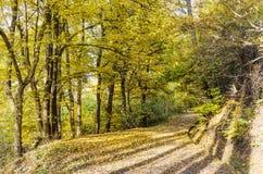 Beautiful  autumn trees .Autumn landscape. Beautiful  autumn landscape with colorful yellow trees Royalty Free Stock Image