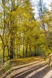 Beautiful  autumn trees .Autumn landscape. Beautiful  autumn landscape with colorful yellow trees Stock Photos