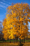 Beautiful autumn trees. Autumn landscape. Royalty Free Stock Photo