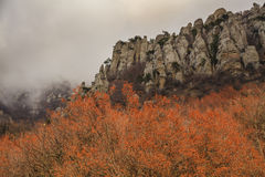 Beautiful autumn trees in the background of  mountains. Royalty Free Stock Photography
