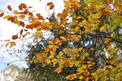 Beautiful autumn trees. Autumn. Bavaria. royalty free stock photography