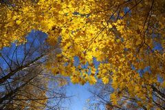 Beautiful autumn trees and blue sky Royalty Free Stock Images