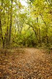 Beautiful autumn trees and bushes in the woods. Trail, path in the forest. Fallen leaves. Calm cloudy day stock images