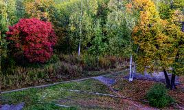 Beautiful autumn trees in the city park royalty free stock photos