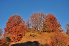 Beautiful autumn hill landscape Stock Photo