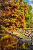 Beautiful autumn trees and lake in park Sempione, Milan Royalty Free Stock Images