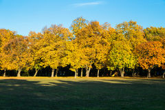 Beautiful autumn trees. Royalty Free Stock Image
