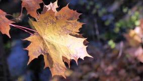 Beautiful Autumn stock footage