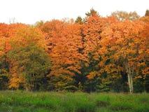 Beautiful autumn trees , Lithuania stock photography