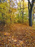 Path in park and colorful  autumn trees, Lithuania Stock Photography