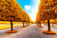 Beautiful autumn trees Royalty Free Stock Photo