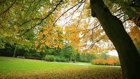 Beautiful autumn trees in park stock footage