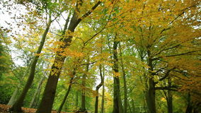 Beautiful autumn trees in park. stock video