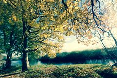 Beautiful Autumn trees at the river in Vintage style stock images