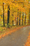 Beautiful autumn trees and road. Colorful autumn forest with asphalt road after rain Stock Images