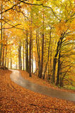 Beautiful autumn trees and road Stock Photo
