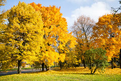 Beautiful autumn trees stock photography