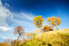 Beautiful autumn trees Royalty Free Stock Photography