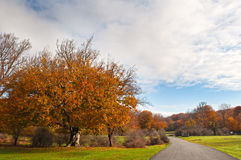 Beautiful autumn trees in Urbasa mountains, Navarra, Spain Royalty Free Stock Images