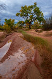 Beautiful Autumn Trees Utah Canyonlands Fall Landscape Royalty Free Stock Photos