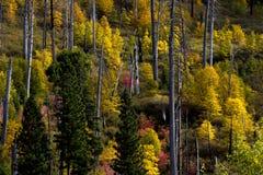 Beautiful autumn trees in Yosemite National Park Royalty Free Stock Photos
