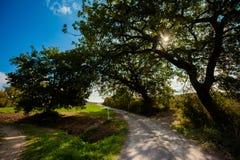 Beautiful autumn Tuscany vineyards view Royalty Free Stock Photography