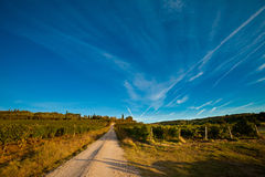 Beautiful autumn Tuscany vineyards view Stock Photos
