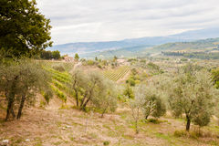 Beautiful autumn Tuscany vineyards view Royalty Free Stock Photo