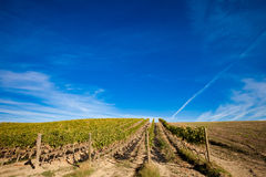 Beautiful autumn Tuscany vineyards view Stock Photos