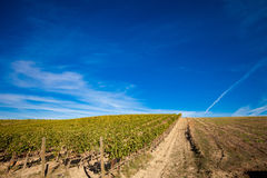 Beautiful autumn Tuscany vineyards view Stock Images