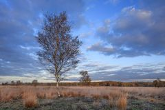 Beautiful autumn twilight scenery at a tranquil moorland, Goirle, Netherlands. Beautiful autumn twilight scenery at a tranquil moorland, Goirle, The Netherlands Stock Photography