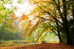Autumn thoughts Royalty Free Stock Photos