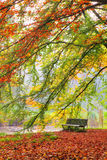 Bench in autumn Royalty Free Stock Photography
